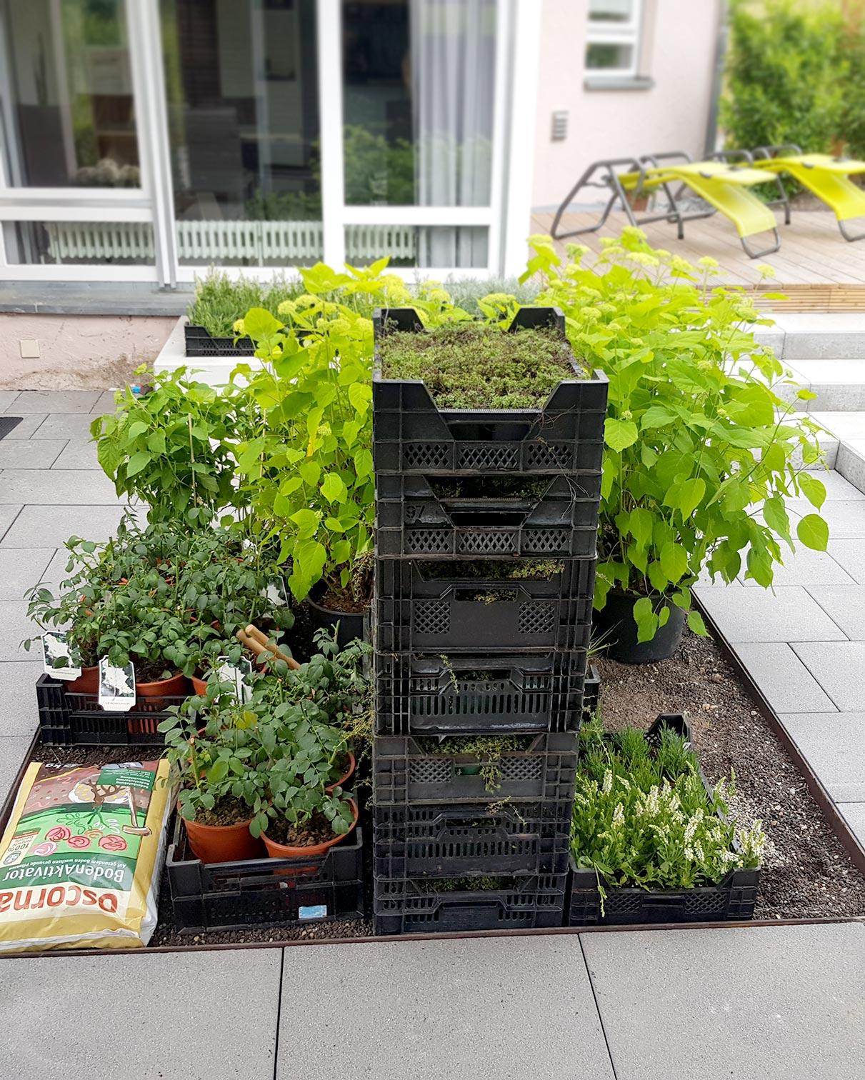 bolay-gartenbau_projekte_raffinierte-gartenanlage_bepflanzung